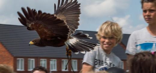 MFA de Vogelweide 2015 11