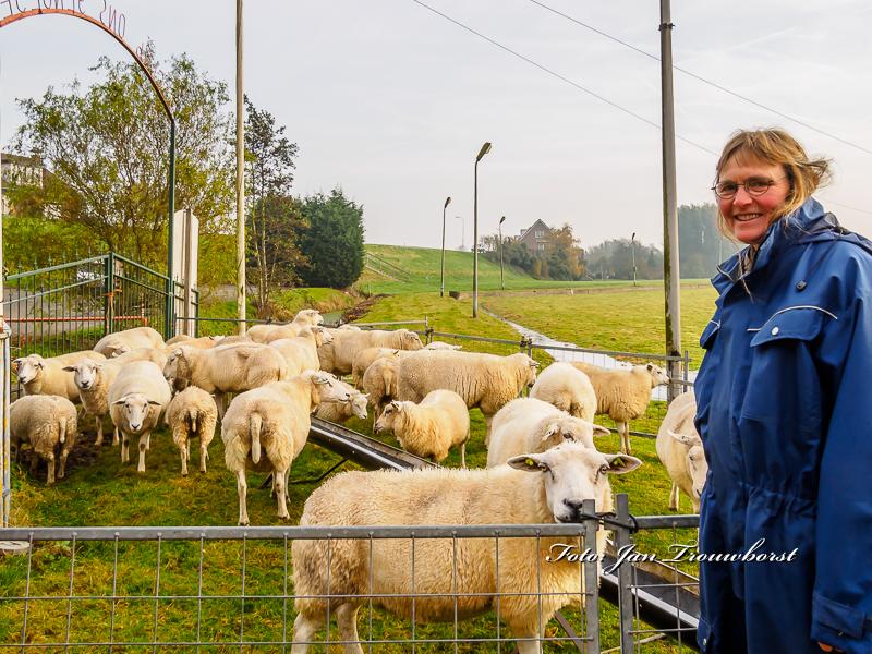 schapen-eraf-water-erop-10-2