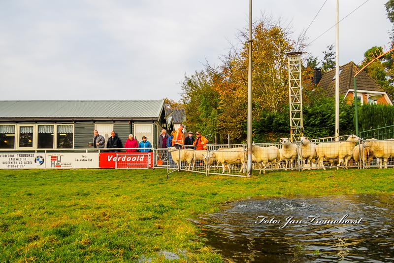 schapen-eraf-water-erop-11-2