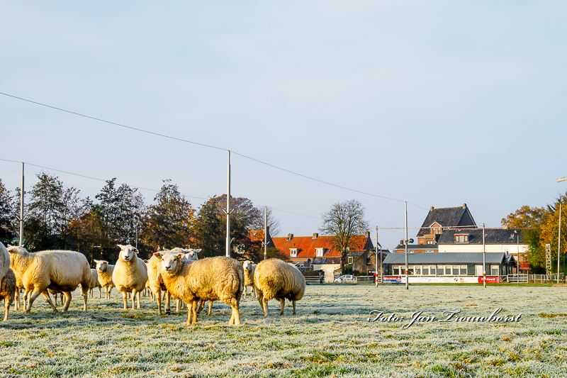 schapen-eraf-water-erop-4-2