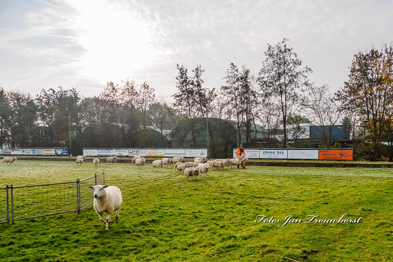 schapen-eraf-water-erop-7-2
