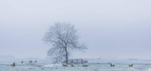 Foto: Wim van de Water Fotografie