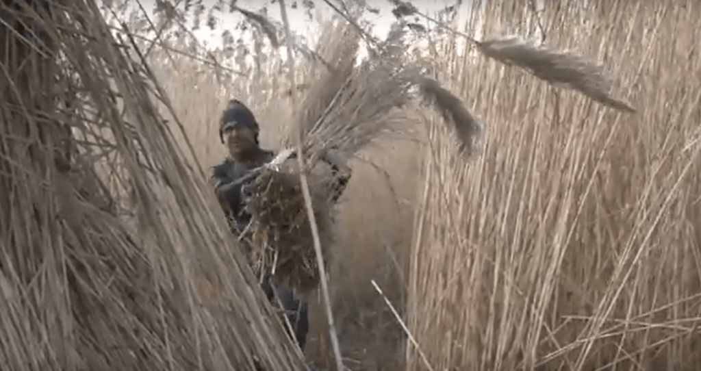 rietsnijden