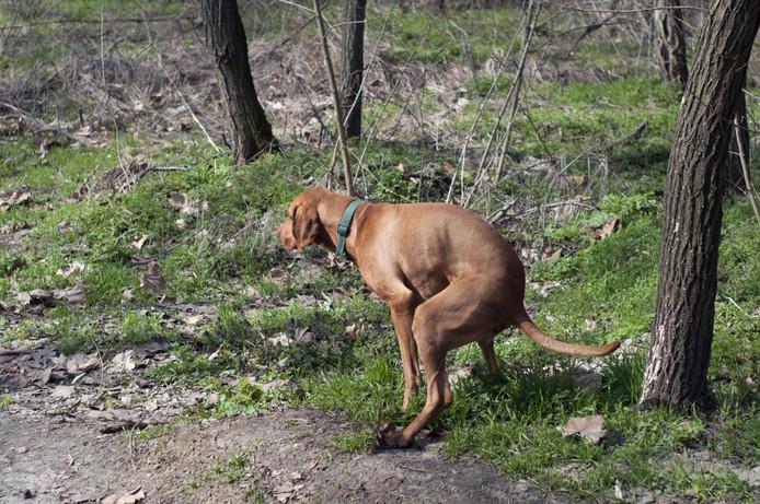 Hondenpoep 3