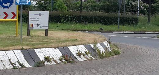 Verwilderd groen ontsiert zilverrotondes in Schoonhoven. Foto: Twitter/ Anthony Tom)