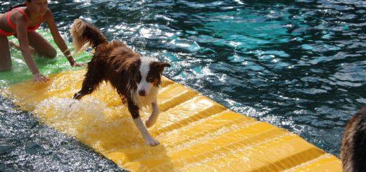 Honden zwemmen 02-09-2017 215