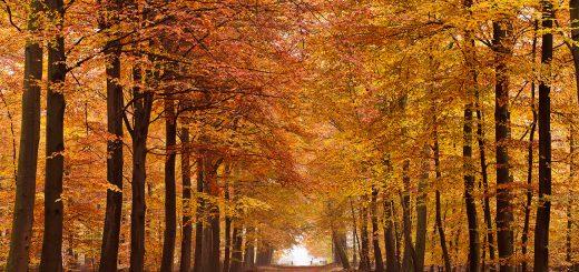 herfst-schilderij-interieur