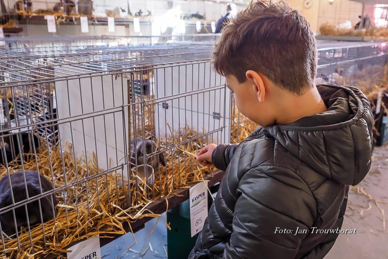 Kleine dieren show-18