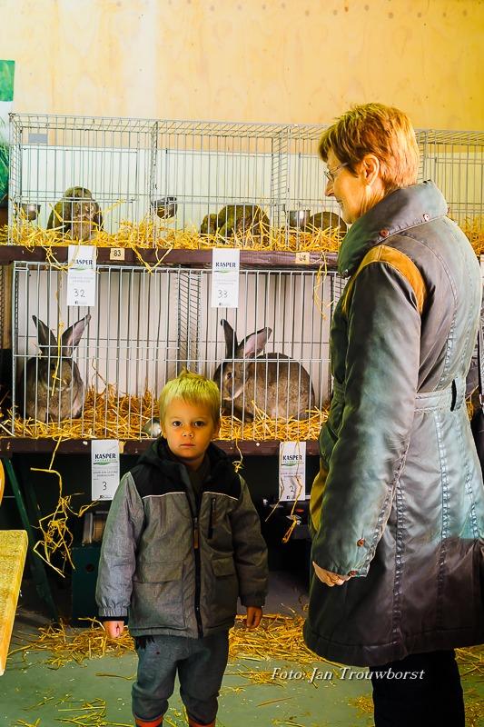 Kleine dieren show-4