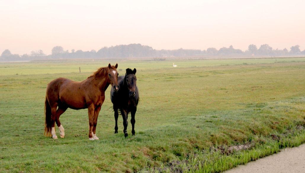 paarden-in-weide-4-1030x584