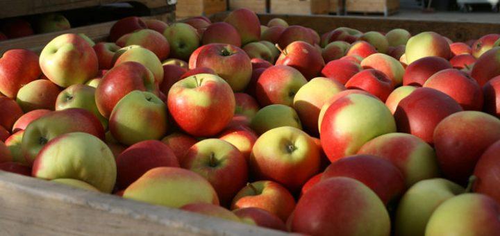 zelf-appels-plukken