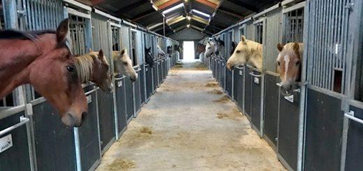 Paarden-op-stal-773x1030 xxx